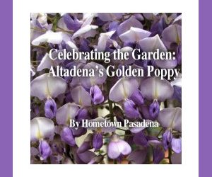 Celebrating the Garden: Altadena's Golden Poppy