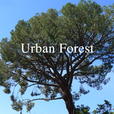 Altadena's Urban Forest: Past, Present & Future