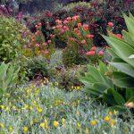 gardenbeauty